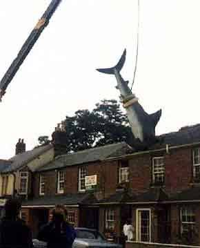 Crane support: Shark In Roof, The Headington Shark