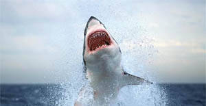 Shark In A Roof- Crazy Or Compelling Property?