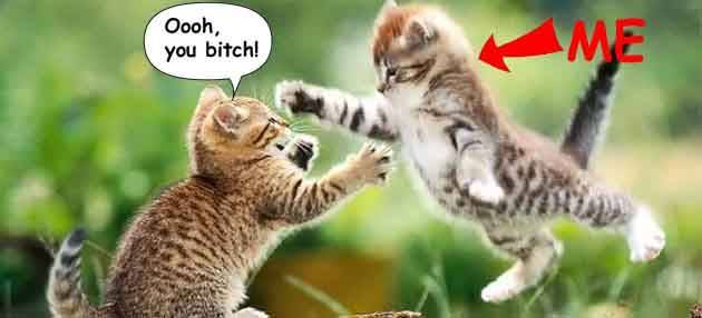 Property Cat Fight