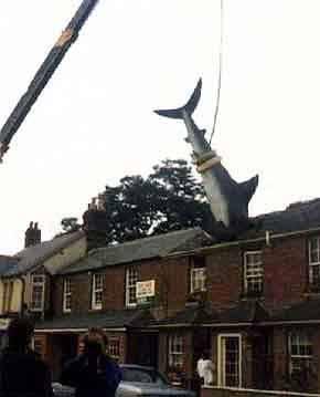Crane support: Shark In Roof, The Headington Shark