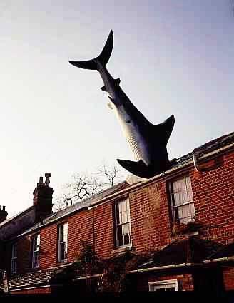 Side shot 3: Shark In Roof, The Headington Shark