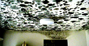 Who Is Responsible For Mould In Rentals- Tenant Or Landlord?